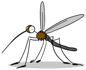 conseil-moustique